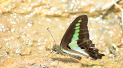 Green butterfly fly away - close up Stock Footage