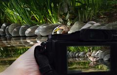 wildlife photography in focus on viewfinder - stock photo