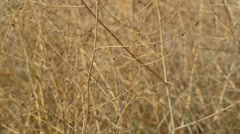 Dry branches of bushes Stock Footage
