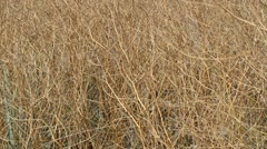 Branches of dry bushes Stock Footage