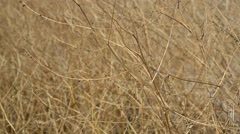 Dry bushes Stock Footage
