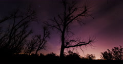 Gangly Tree Cloud Lapse Stock Footage