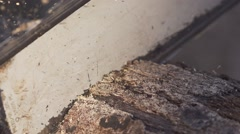 Chainsaw plunges into old timber - Closeup - 240fps slow motion 01 Stock Footage