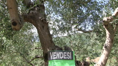Italy - olive tree in the summer with vendesi sign Stock Footage