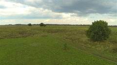 Lonely green tree in a field. The view from the air, circled over around Stock Footage