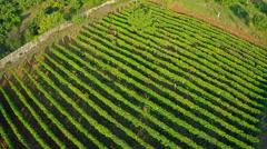 Vineyard aerial Stock Footage