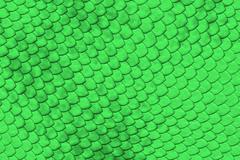 green reptile skin - stock illustration