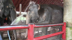 Elephants showering Stock Footage