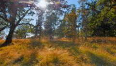 4K Helliwell Provincial Park, Hornby Island, BC Stock Footage
