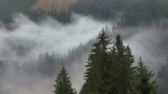 Fog forest time laps 03 rauris Stock Footage
