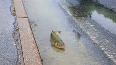 Helpless alive fish on street after flooding calm down Stock Footage