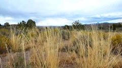 High Desert Grass Stock Footage