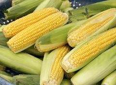 The crops of corn for sale at market - stock photo