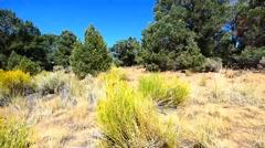 Pinyon Pine and Waving Grass Stock Footage