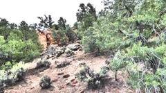Pinyon Forest in the Red Rocks Stock Footage