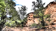 Red Rocks and Pinyon Pine Stock Footage