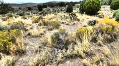 Windswept Grass, Sagebrush and Pinyon Stock Footage