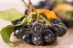 Choke-berry (aronia) - branch with berries Stock Photos