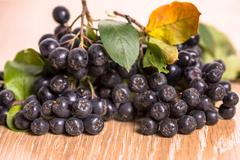 choke-berry (aronia) - branch with berries - stock photo