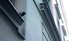 Pigeon on the roof edge - windows Stock Footage