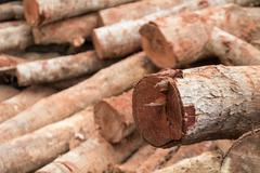 Woodpile of cut lumber for forestry industry Stock Photos