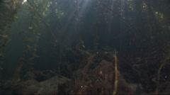 Underwater sunlight penetrates in reeds Stock Footage