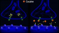Cocaine action on dopamine synpase Stock Footage