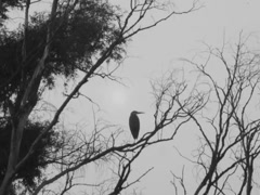 Ukrainian nature, heron on a branch Stock Footage