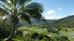 Hanalei Valley Lookout, Kauai, Hawaii Stock Footage