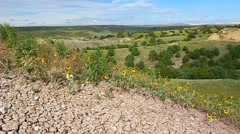 Wildflowers in Badlands National Park Stock Footage
