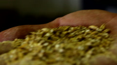 Brewmaster hops grains Stock Footage