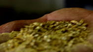 Stock Video Footage of Brewmaster hops grains
