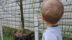 Toddler playing with garden fence Stock Footage