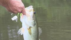 Largemouth Bass Fishing Stock Footage
