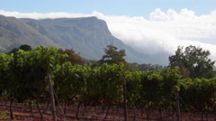 VINEYARDS CAPE TOWN CONSTANTIA VALLEY WINERY Stock Footage