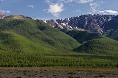 Mountains forest Stock Photos