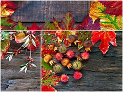 collage of fall, winter foliage. - stock photo