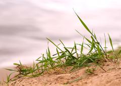 grass sand beach close up - stock photo