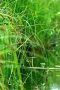 reeds bokeh water - stock photo
