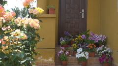 Great vacation house entry, stairs with flowers in pots pink roses, love feeling Stock Footage