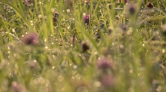 Dew on grass in the early morning in germany Stock Footage
