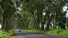 Tree tunnel, road to Poipu, Kauai, Hawaii Stock Footage