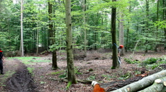 Using a chainsaw to fell a tree in the forest Stock Footage