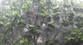 Tropical downpour. Trees and pouring rain Footage