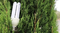 Green tree and energy saving light bulb Stock Footage
