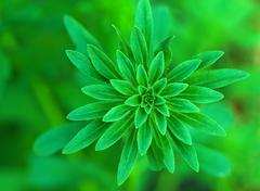 Aster bud green background Stock Photos