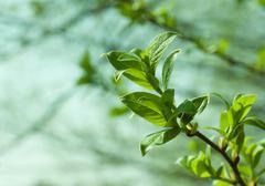 spring tree foliage - stock photo