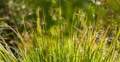 4K Green Grasses 14 4k or 4k+ Resolution