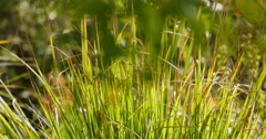 4K Green Grasses 14 Stock Footage