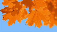 Change the color of the leaves Stock Footage